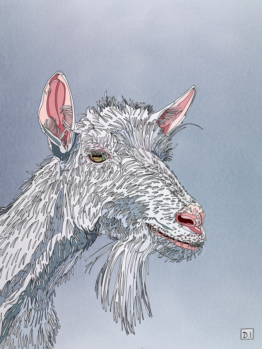 Goat on Silver by Dylan Izaak -  sized 24x32 inches. Available from Whitewall Galleries